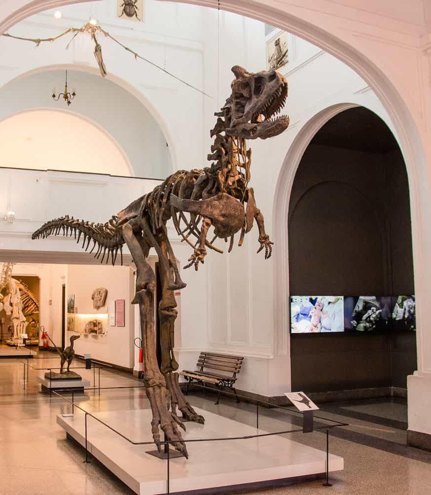 Museu de Zoologia (MZ) da USP - Série de conteúdos virtuais
